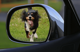Car safety for your pets